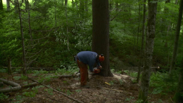 ws td lumberjack cutting through large tree in forest, stowe, vermont, usa - only mature men stock videos & royalty-free footage