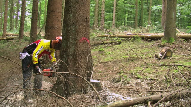 ms lumberjack cutting tree in forest / zerf, rhineland palatinate, germany - holzfäller stock-videos und b-roll-filmmaterial