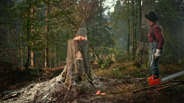 slo mo lumberjack felling a tree with an axe - moving down stock videos & royalty-free footage