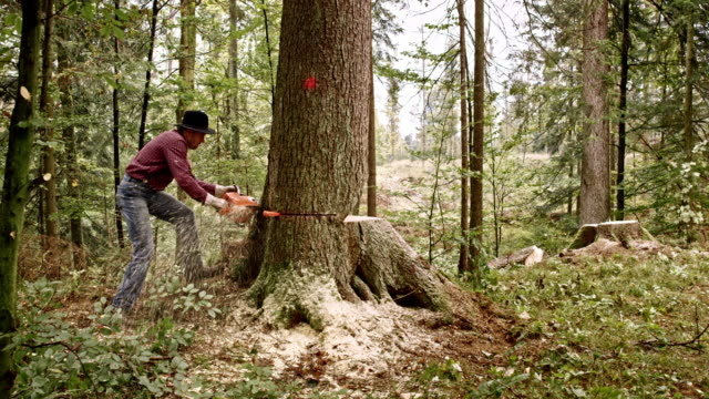 lumberjack felling a tree with chainsaw - industria forestale video stock e b–roll