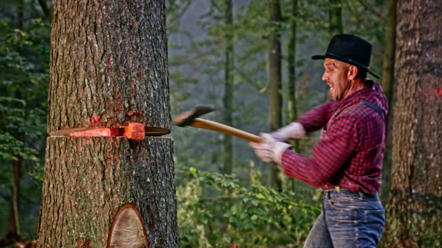 lumberjack hitting wedges in the tree trunk - slug stock videos & royalty-free footage