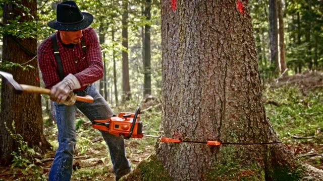 slo mo lumberjack slå kilar med en yxa - hängslen bildbanksvideor och videomaterial från bakom kulisserna