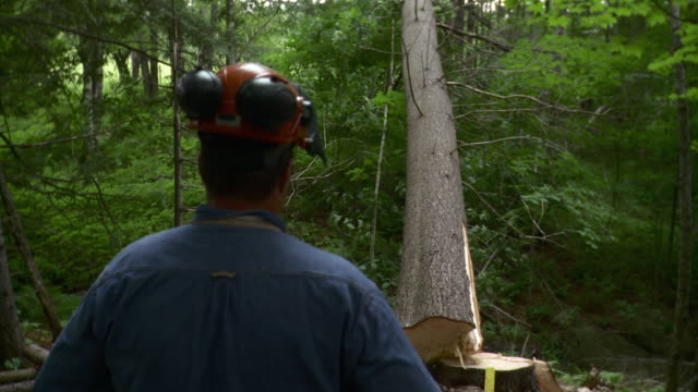 ms lumberjack looking at fallen tree, stowe, vermont, usa - stowe vermont stock videos & royalty-free footage