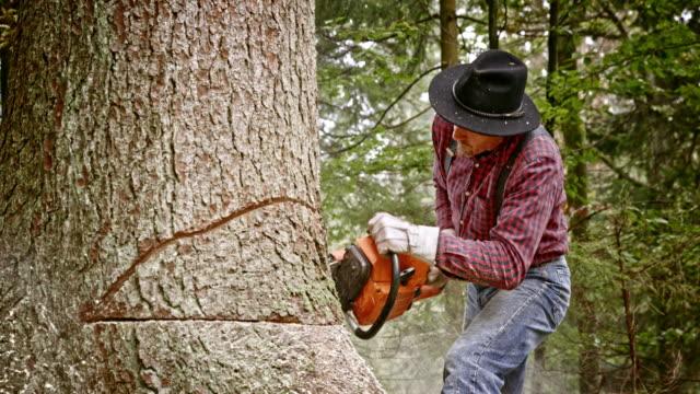 lumberjack att göra en konventionell sänkning med hjälp av en motorsåg - hängslen bildbanksvideor och videomaterial från bakom kulisserna