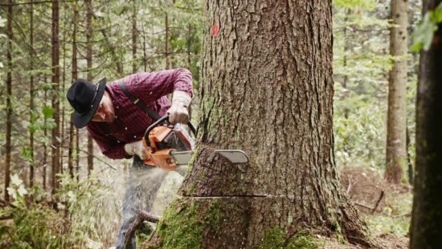 lumberjack making a horizontal cut into tree with chainsaw - lumberjack stock videos and b-roll footage