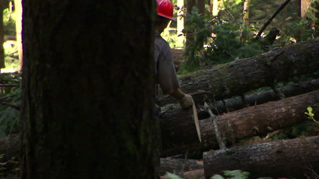 a lumberjack measures the diameter of a log, then measures the length to a cut. - tape measure stock videos & royalty-free footage