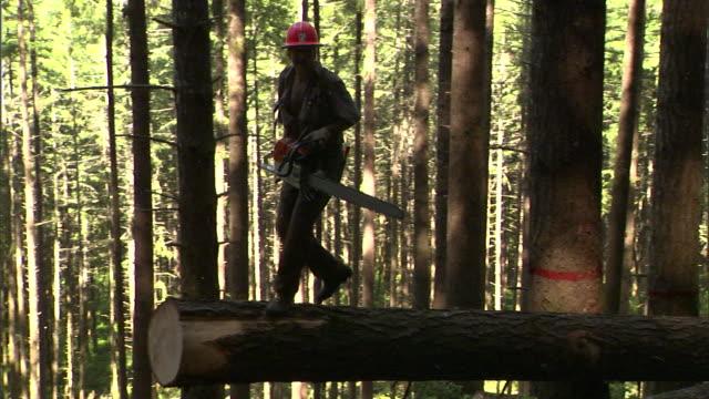 vídeos de stock e filmes b-roll de a lumberjack runs across a log and attaches a tether. - arnês de segurança
