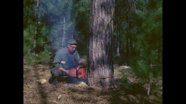 vidéos et rushes de ms lumberjack sawing tree trunk with chainsaw in forest / united states - bûcheron