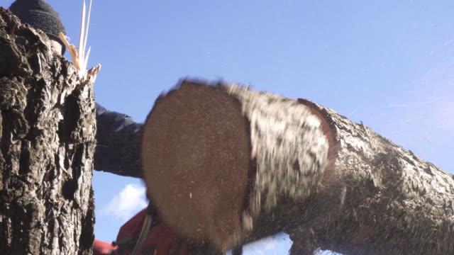 lumberjack - fallen tree stock videos and b-roll footage