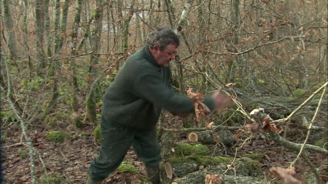 MS Lumberjack working in forest / Burgundy, France