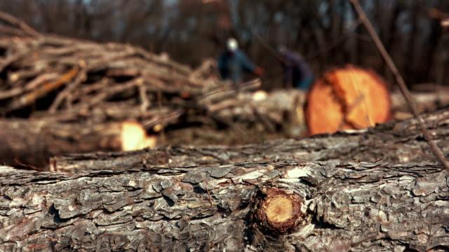 vídeos de stock, filmes e b-roll de lenhadores em serraria - ramo parte de uma planta