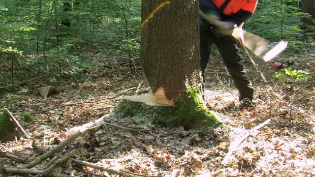 ms lumberjacks at work in forest / zerf, rhineland palatinate, germany  - holzfäller stock-videos und b-roll-filmmaterial