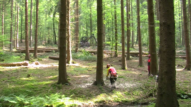 vidéos et rushes de ws lumberjacks at work in forest / zerf, rhineland palatinate, germany  - bûcheron