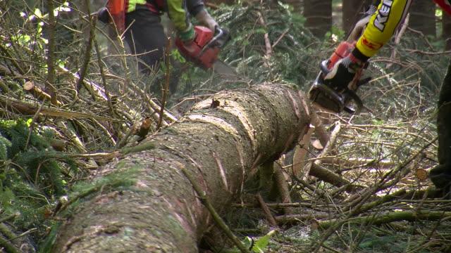 cu lumberjacks at work in forest / zerf, rhineland palatinate, germany - holzfäller stock-videos und b-roll-filmmaterial