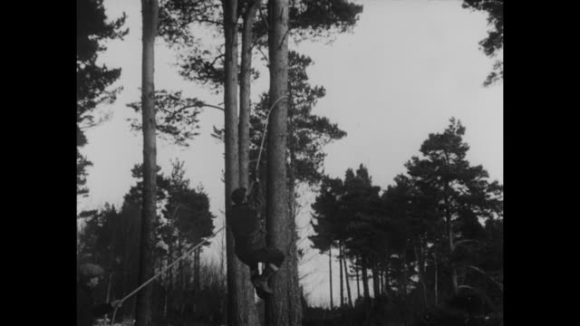 vídeos de stock, filmes e b-roll de lumberjacks in logging camp carrying logs past frame of shed they are building / man climbing down tree / man chopping down tree with ax / man... - forester
