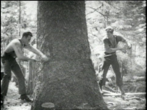 lumberjacks saw down a huge tree in alaska. - 木材産業点の映像素材/bロール