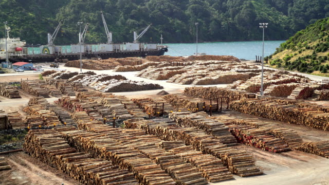 lumberyard picton harbor and log grabbers new zealand - timber stock videos & royalty-free footage