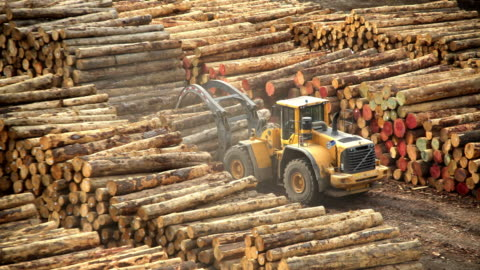 lumberyard picton harbor and mechanical grabber new zealand - forestry industry stock videos & royalty-free footage