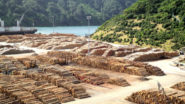 lumberyard with grabber loading bulk carrier new zealand - forestry industry stock videos & royalty-free footage