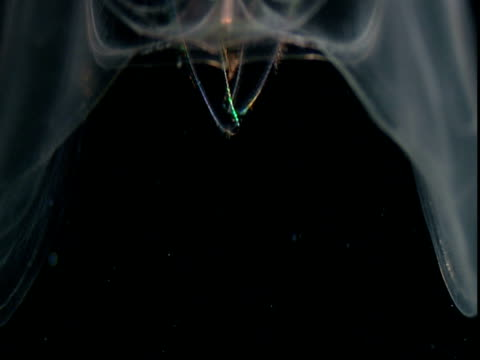 luminous coloured bands flicker down to the bottom of a transparent comb jelly. - struttura cellulare video stock e b–roll