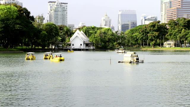 vídeos de stock, filmes e b-roll de parque lumpini em bangkok - grupo mediano de animales