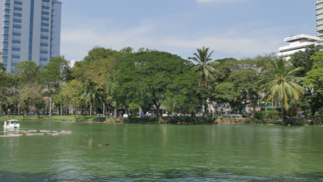 lumpini park, bangkok, thailand, southeast asia, asia - three quarter length stock videos & royalty-free footage