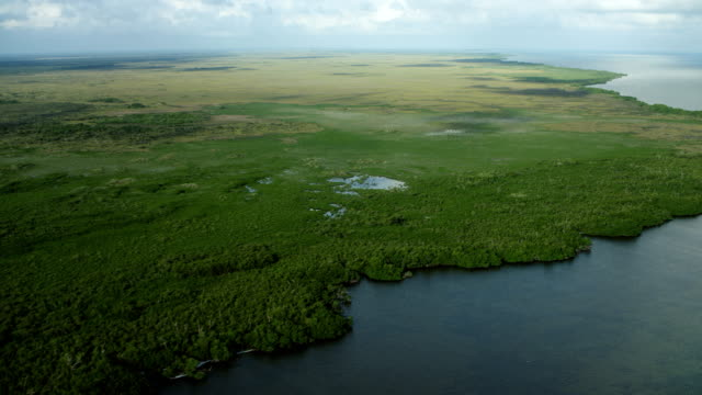 vídeos y material grabado en eventos de stock de lush coastal area on yucatan peninsula - golfo de méxico