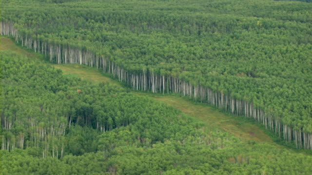 Lush coniferous trees fill a boreal forest in Canada.