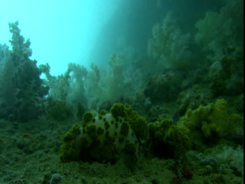 lush, dense aquatic plants and soft corals wave in the tides of the ocean. - tide stock videos & royalty-free footage