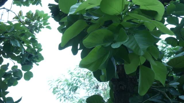 gedeihend auf hintergrund - tropischer baum stock-videos und b-roll-filmmaterial