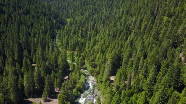 vídeos de stock, filmes e b-roll de lush forest in california, aerial - north america