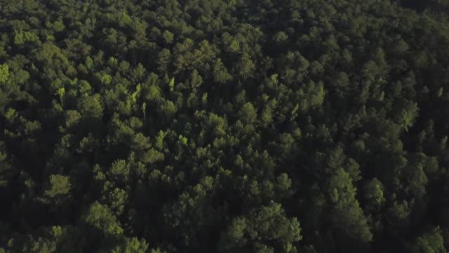 Lush forest in Georgia, aerial