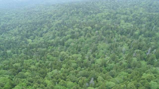 lush forest in japan mountains, aerial - 木立点の映像素材/bロール