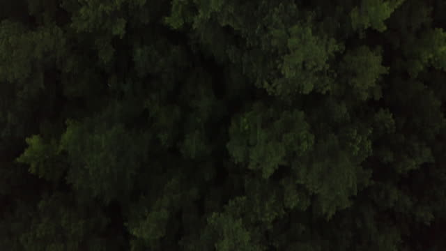 Lush forest landscape, overhead aerial