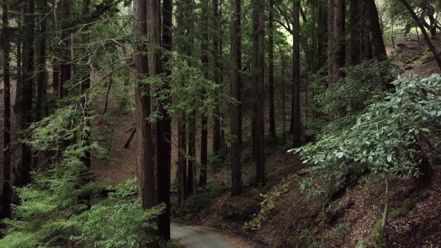 Lush forest on hillside, aerial