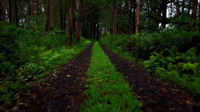 Lush Forest Surrounding Dirt Road by Drone