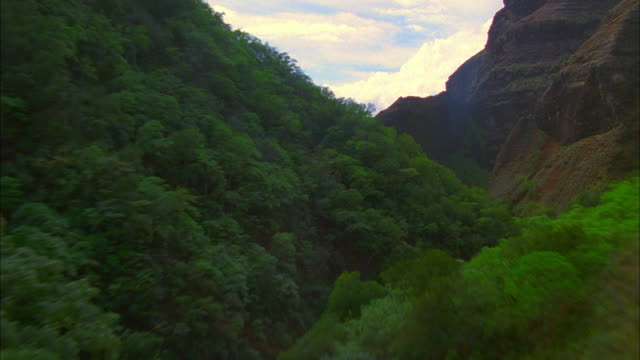 lush green foliage fills a narrow canyon. available in hd. - black canyon stock videos & royalty-free footage