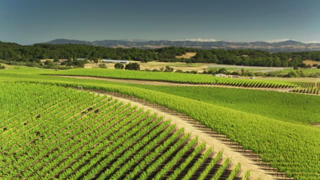 Lush Green Grape Vines in Northern California Vineyard - Drone Shot