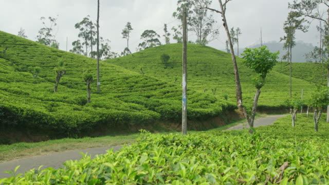 vidéos et rushes de lush ms vertes collines couvertes de théiers, sri lanka - culture sri lankaise