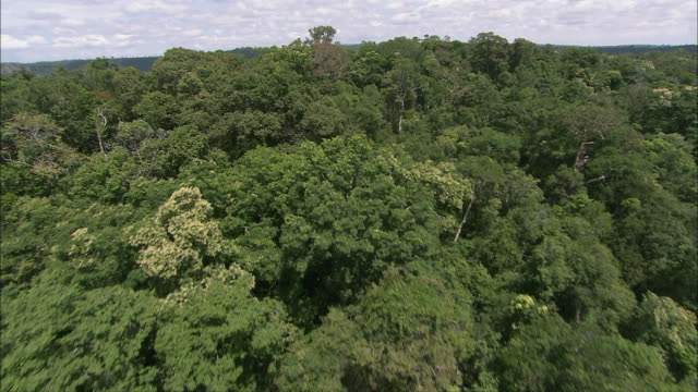 aerial lush green jungle / siem reap province, cambodia - cambodia stock videos and b-roll footage