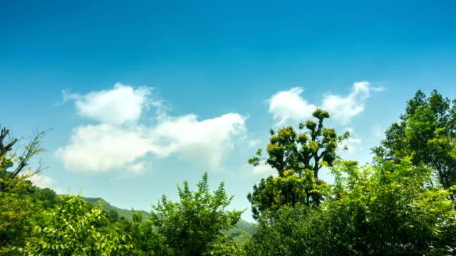 山上鬱鬱蔥蔥的綠樹和雲彩。 - low angle view 個影片檔及 b 捲影像