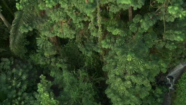 vídeos y material grabado en eventos de stock de lush, green trees grow tall under a dome at the eden project in england. - cornwall inglaterra