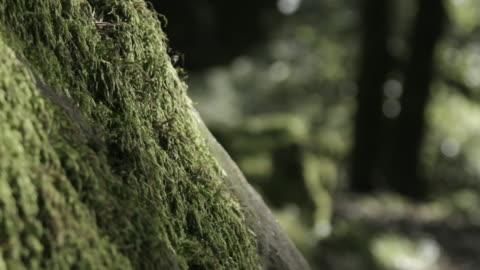 lush moss on tree, close up - moos stock-videos und b-roll-filmmaterial