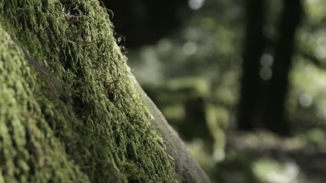 vídeos de stock, filmes e b-roll de lush moss on tree, close up - tronco de árvore