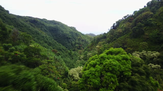 lush mountains in hawaii, aerial - 森点の映像素材/bロール