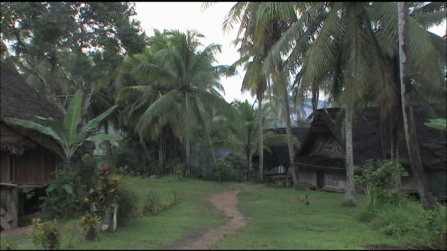 lush palm trees line a village path in papua new guinea. - papua new guinea stock videos & royalty-free footage