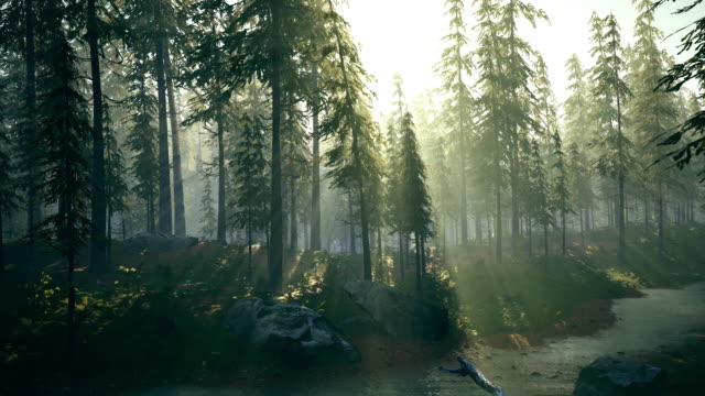 vídeos de stock, filmes e b-roll de pinheiros exuberantes e vegetação rasteira de arbustos e gramíneas. - pinhal