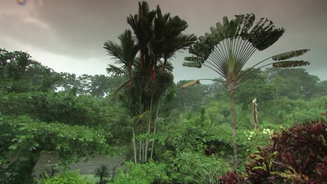 lush plant life in costa rica - costa rica stock videos & royalty-free footage
