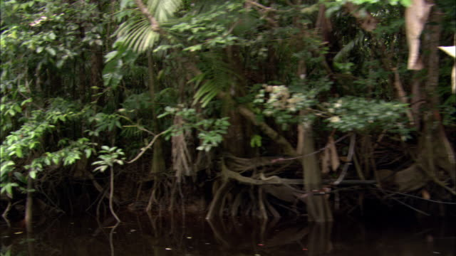 lush trees and shrubs line a river's shore. - french guiana stock videos & royalty-free footage