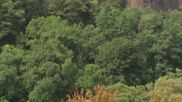 vidéos et rushes de lush trees border sheer cliffs. - cîme d'un arbre